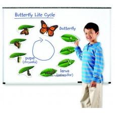 Az élet körforgása - Pillangó (mágneses)