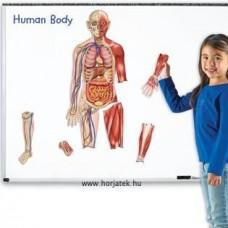 Kétoldalas Mágneses Emberi Test