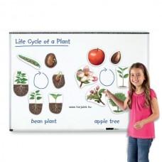 Az élet körforgása - Növények (mágneses)